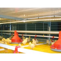BROMAXX® BROILER COLONY SYSTEM