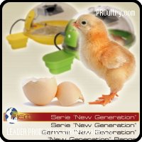Egg incubators small to medium size