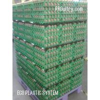 Egg tray dividers - ECO PLASTIC SYSTEM