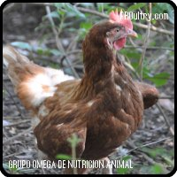 MACROMIX- Ecological Laying hens