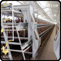 Pullet Cages
