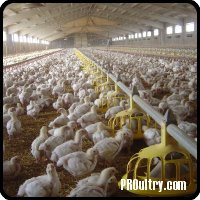 Comederos Broilers - Roxell