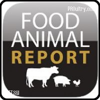 food_animal_report_1.JPG