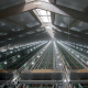 ZUCAMI POULTRY EQUIPMENT - alimentacion.png